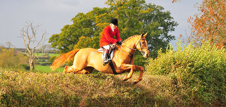 Hedge jumping foxhunt