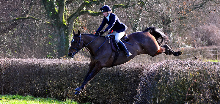 Jumping hedges in the Blackmore Vale