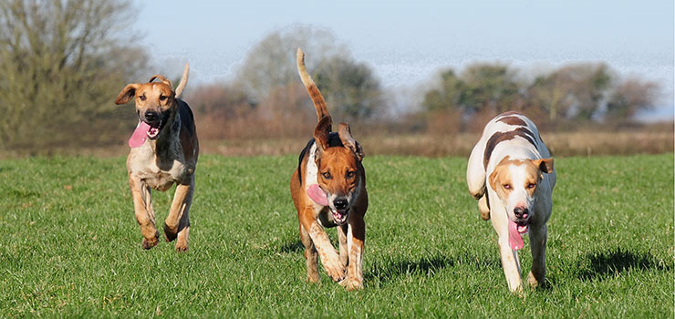 Blackmore & Sparkford Vale Hounds