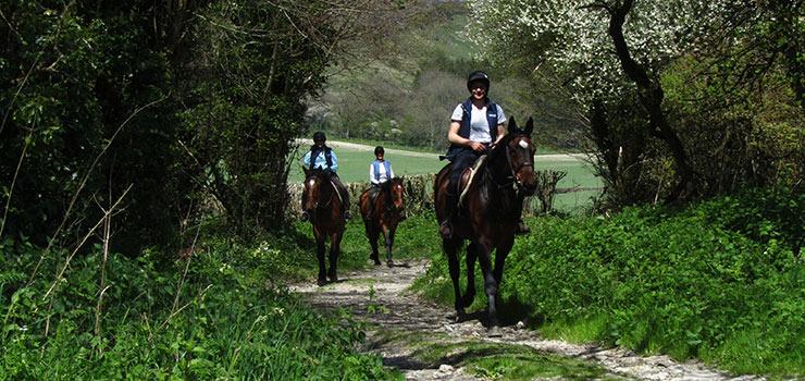 short horse rides